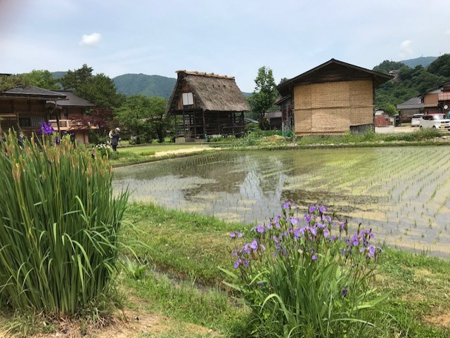 Shirakawa-go Rice Fields